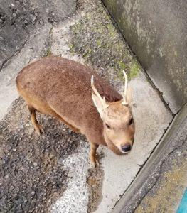 鹿_男の子