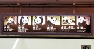 歴代パンダ1