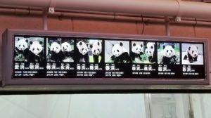 歴代パンダ2